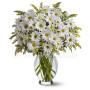 bouquet-margherite-bianche