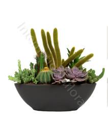 piante-grasse-miste1.jpg