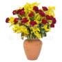 12-roselline-rosse-mimosa