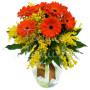 bouquet-di-gerbere-mimosa