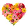 cuore-di-gerbere-fiori-misti